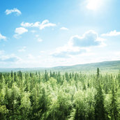 Forest in sunny day wallpaper